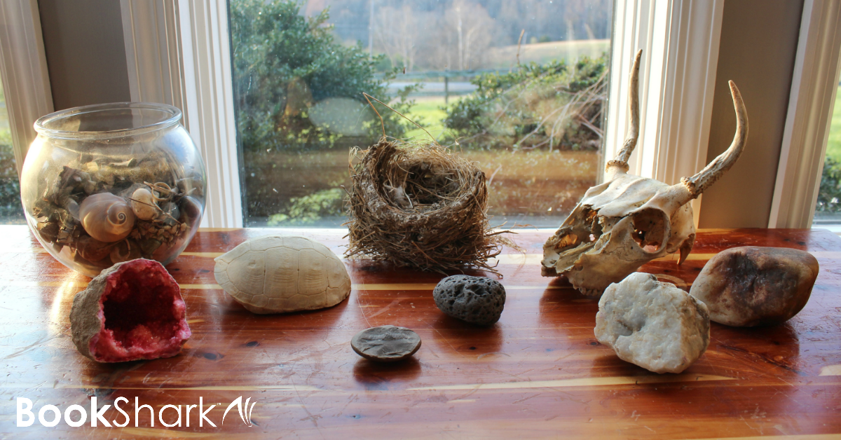 Display rock collections with a nature table
