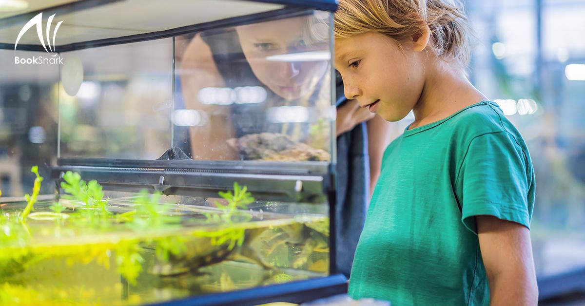 Homeschool Spaces: Indoor Nature Center